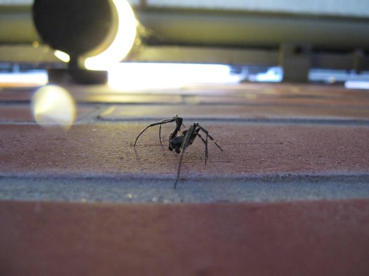 Hey, Spider